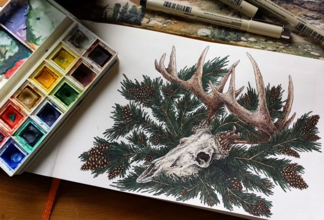 Jess Hrycyk - Balsam Skull Illustration